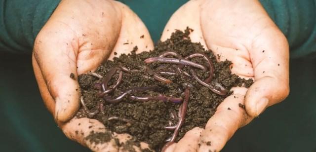 vermi-compost-worm-casting