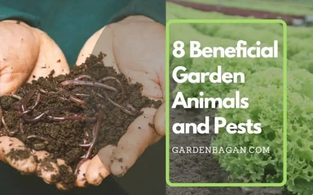8 Beneficial Garden Animals and Pests