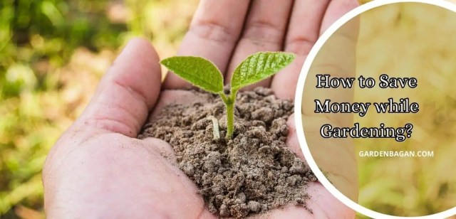 How to Save Money while Gardening