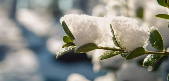 How to Overwinter Perennial Plants