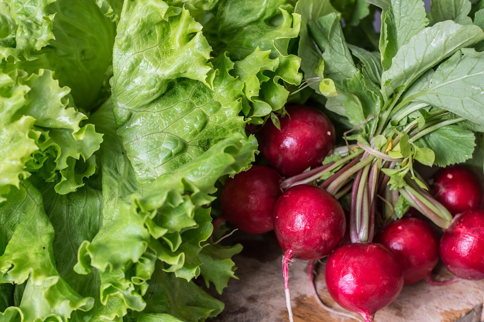 Leafy greens and red beets, freshly picked.