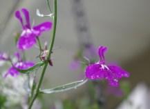 Close up of hanging basket flower