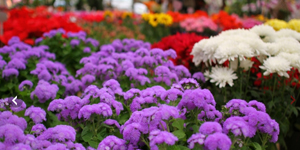 Garden, floricultura e paisagismo em SP