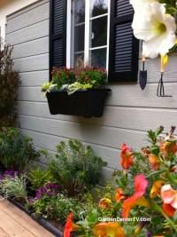 "Drought Tolerant, Heat Loving Plants ""Home & Family Show ..."