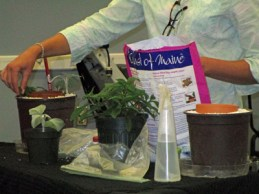 Kris demonstrated how to make root tip cuttings