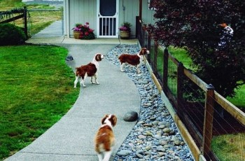 8 Dog-Friendly Backyard Ideas | Healthy Paws pertaining to Small Backyard Landscaping Ideas For Dogs