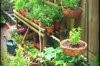 Front Yard Vegetable Garden Ideas Home Design Herb And Plans intended for Backyard Gardening In The Philippines
