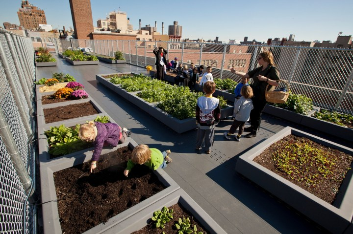 Schools Add In-House Farms As Teaching Tools In New York City - The regarding Garden House School Nyc Reviews