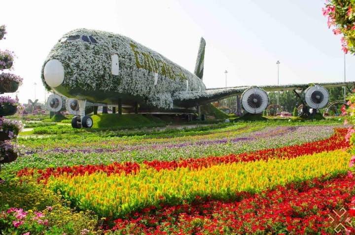 Dubai Miracle Garden: A Flower Paradise - Passion For Dubai regarding Flower Garden In Dubai Location