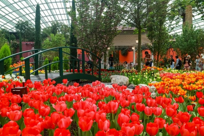 Gardens By The Bay's 2017 Tulip Festival Channels Van Gogh   The with Flower Festival At Garden By The Bay