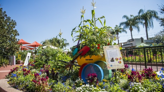 Kumquats And Papayas In A Container Garden? Ideas For Your Own Urban pertaining to Urban Garden And Flower Festival