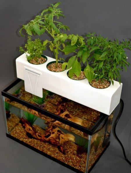 Blue Green Box: Plug & Play Aquarium Aquaponics