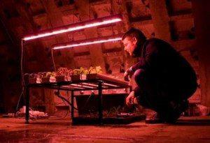 Growing Underground: Hydroponic Urban Farm