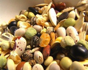 Heirloom seeds seem to be more colorful and interesting than new cultivars.