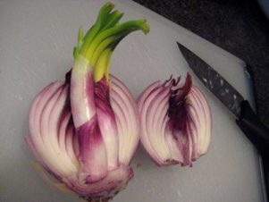 Sprouting Onion Dissection