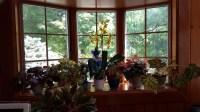 Easy Care Plants for an East Window   Gardendaze