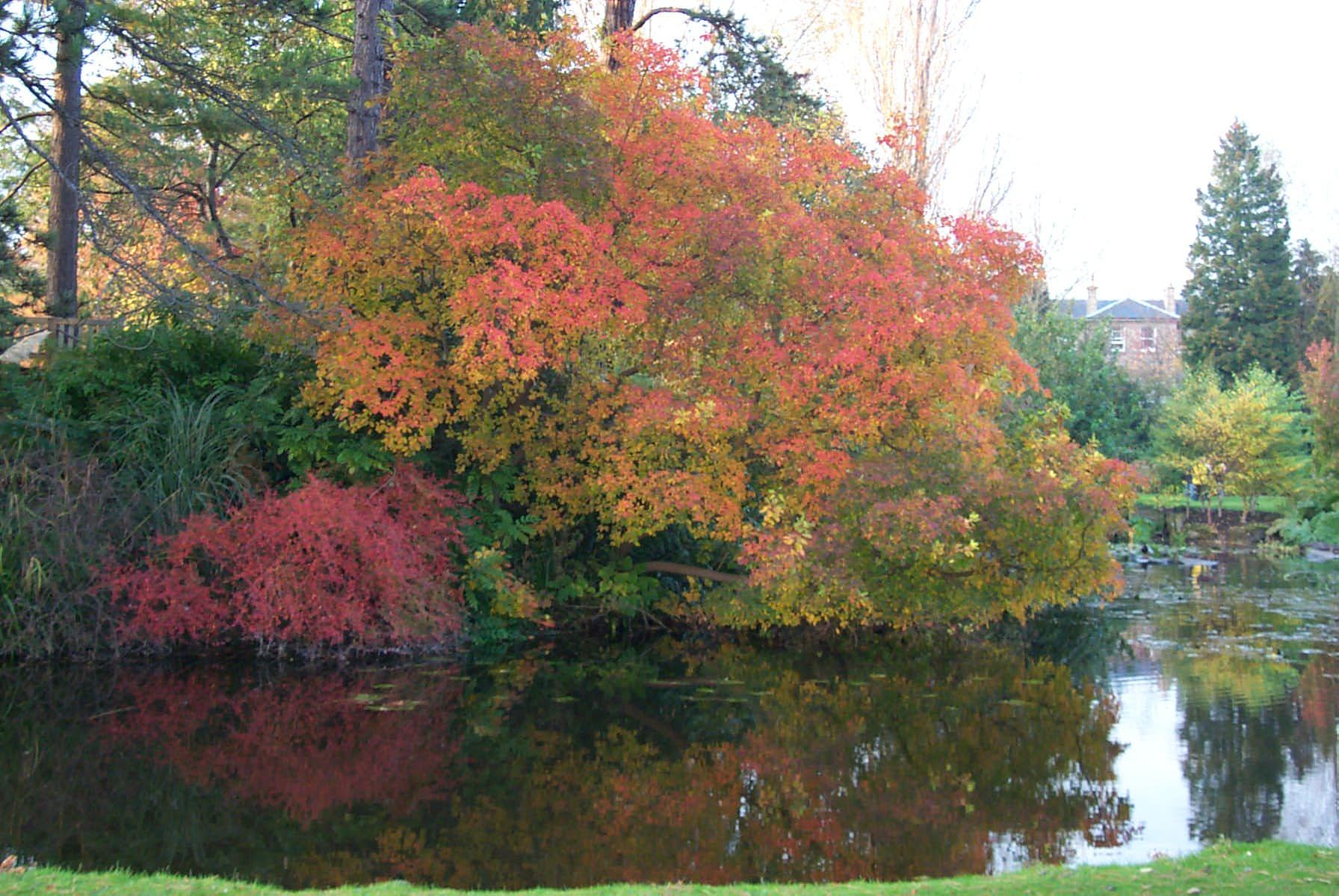 Trees and shrubs for Autumn colour