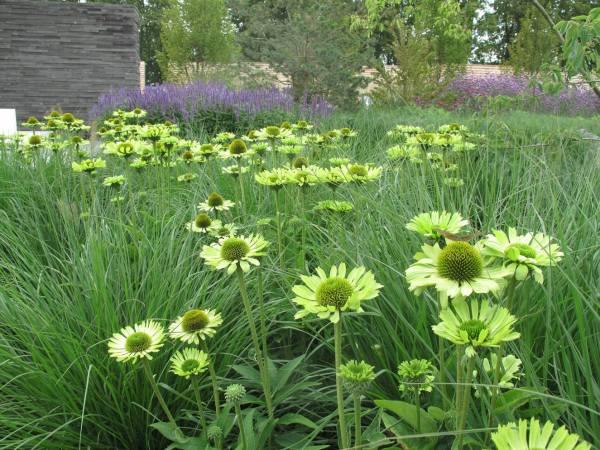 short history of natural gardens