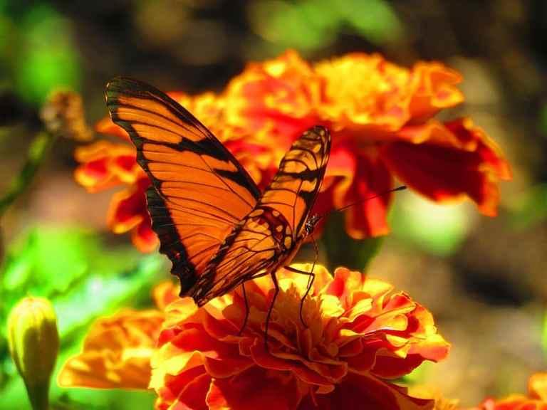 Simple Ways of Attracting Pollinators to Your Garden