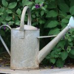 How to Water Plants in Hot Weather