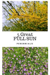 perennials,full sun perennials