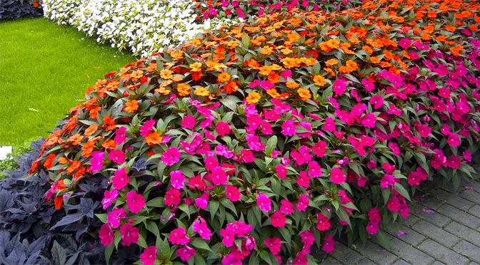 Easy Ground Cover For A Garden Down, Ground Cover Flowering Plants