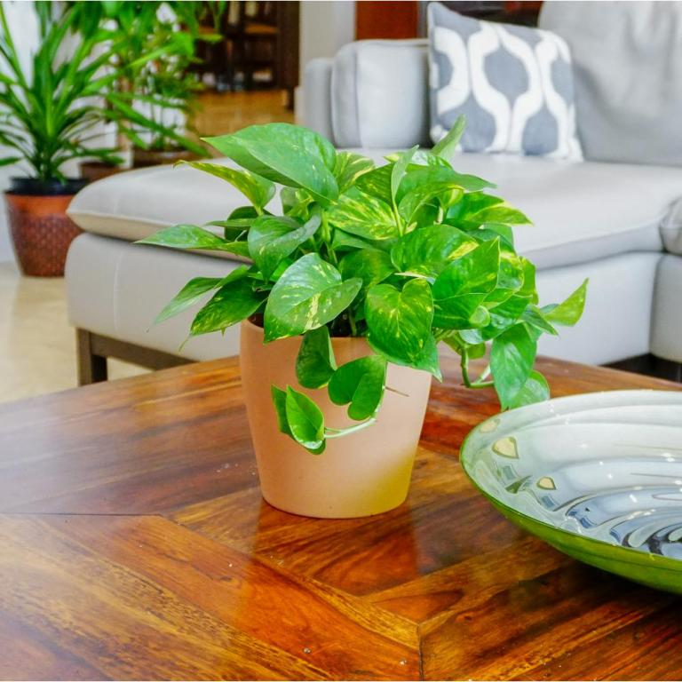 10 Popular Low Light Houseplants