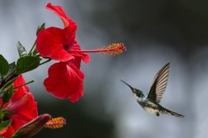 Keep Hummingbirds Coming Back