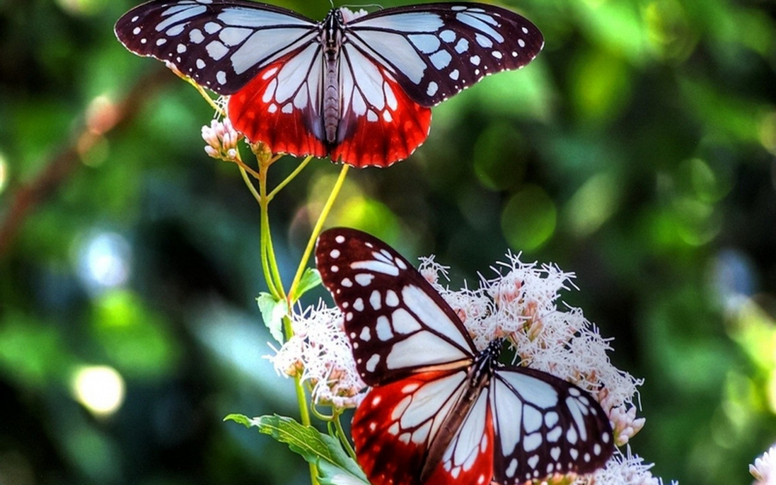 Best Tips for Creating a Butterfly Garden