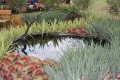 Great foliage plants & interesting sculpture from the Landscape Industries Association of WA