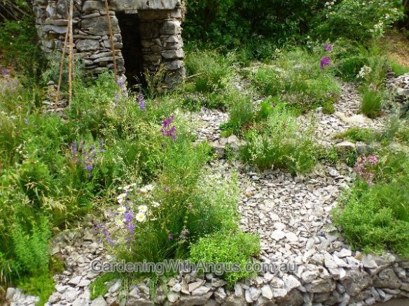 Natural style plantings amid the dry karst stones in 'Pepa's story' garden, designed by Borut Benedecic, Chelsea Flower Show 2012