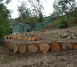 The pine logs cut into rounds make good temporary retaining walls
