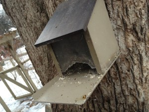 Bird feeders make attractive additions to any winter landscape