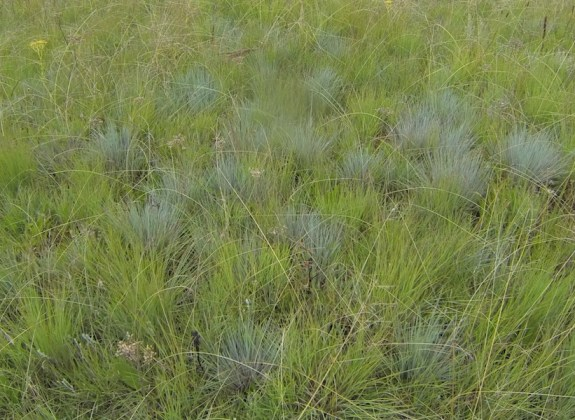 Mixed grass species