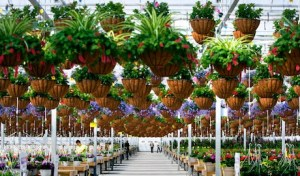 Countryside Greenhouse in Allendale Township