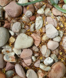 Pebble mulch gets filled with shed flowers and leaves