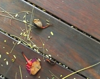 Tiny leaves get stuck between the deck boards