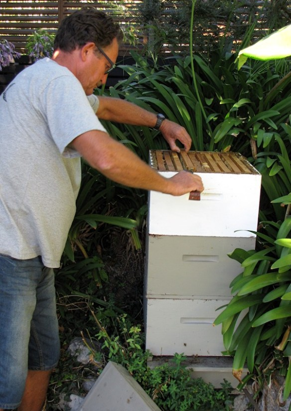 Mike Crosby delves into his Langstroth hive