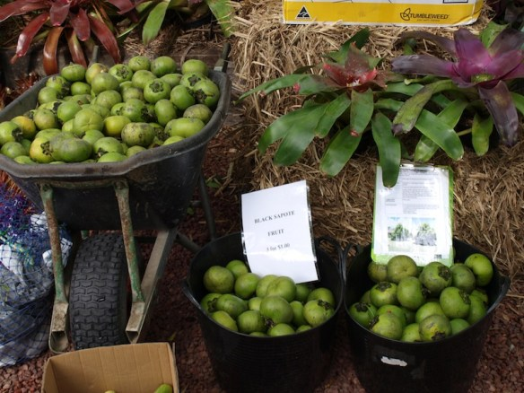 Fruit from our tropical fruit trees sell well