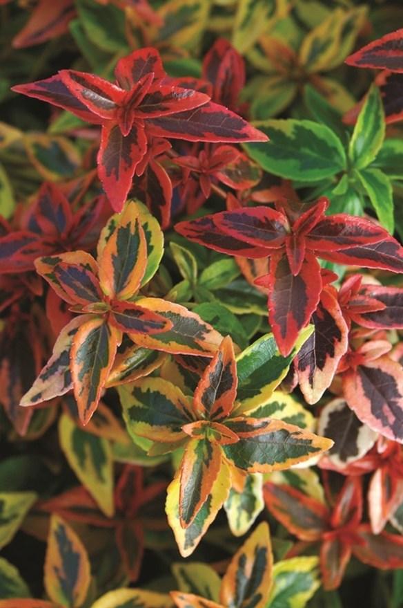 Kaleidoscope foliage 1