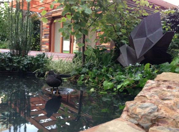 Our daily visitor to the water feature