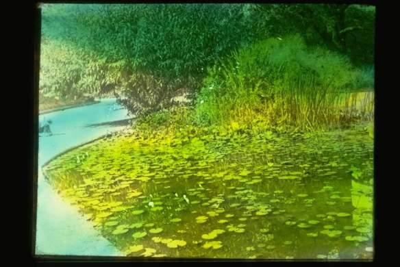 Glass Lantern Slide Lily pond Burnley Gardens