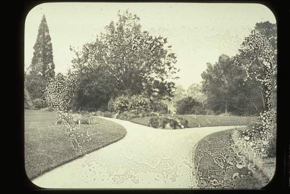 Glass Lantern Slide Looking toward Oak Lawn, Burnley Gardens