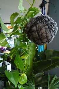 Hanging plant balls