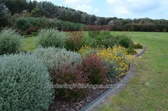 How to prune australian native plants4