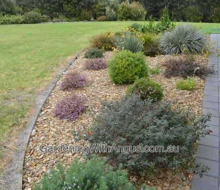 How to prune australian native plants8