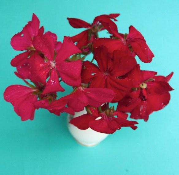 Pelargonium Big Pink and Big Red