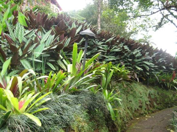 Bank of bromeliads, grasses and prayer plant