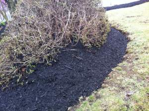 Last year's spring mulch application, when a solid foot of mulch was added.  ©2014BDG