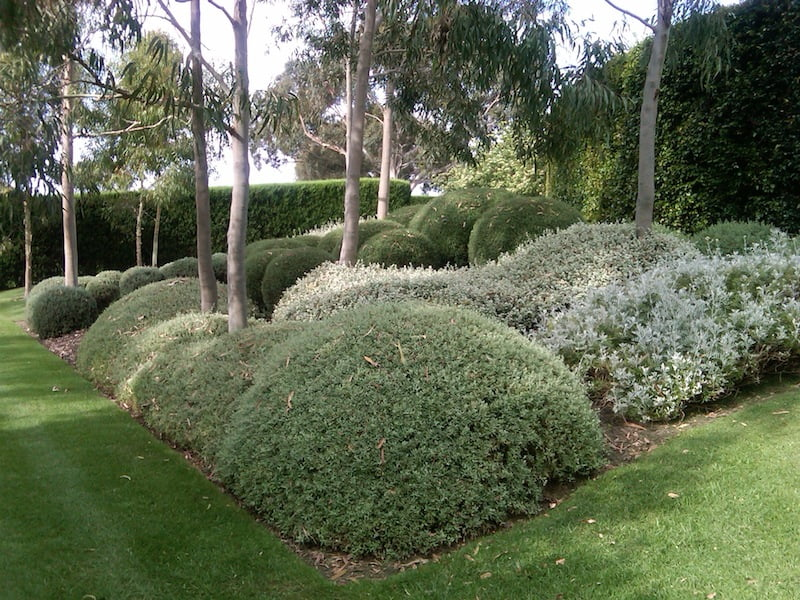 To prune (or not) your Australian plants - GardenDrum
